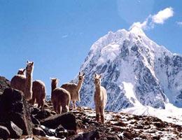 salkantay qori inka travel agency